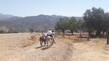 Прогулка на осликах по живописному предгорью Троодоса