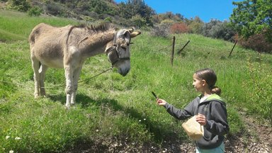частная экскурсия  'Укрощение строптивых осликов в Лимасоле'