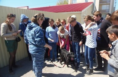 Знакомство со служебными собаками