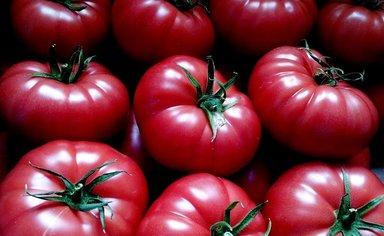 Без бакинских помидоров не оойтись
