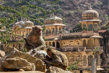 Галта, Индия