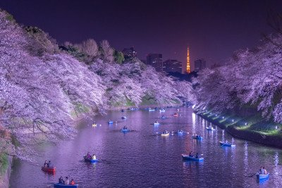 Ночная сакура на Чидоригафучи
