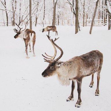 "Новогодний квест ""Спасти оленёнка"""