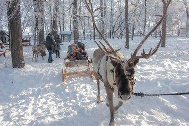 """Экскурсия к северным оленям """"Новогодняя сказка"""""""