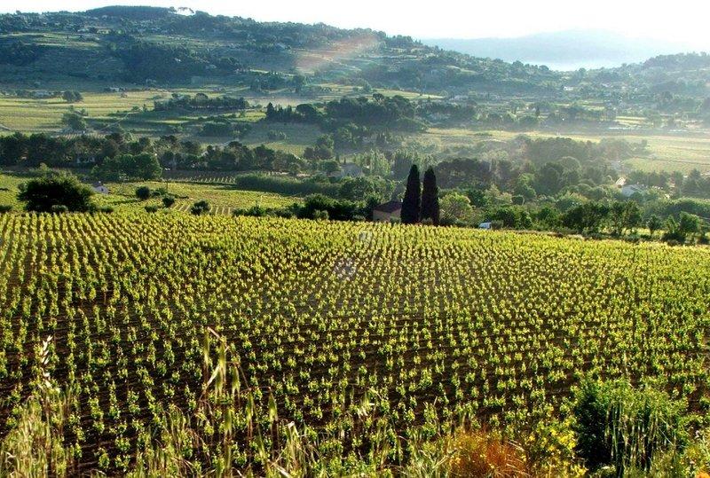 Бескрайние виноградники