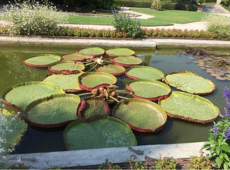 Экзотическая флора ботанического сада