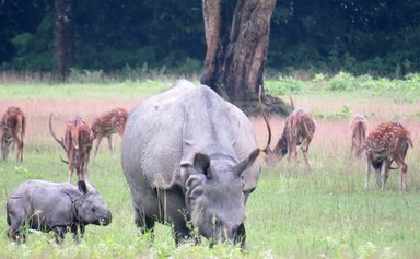 Listed in WHS Chitwan National park