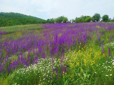 Цветущие поля вдоль нашего пути
