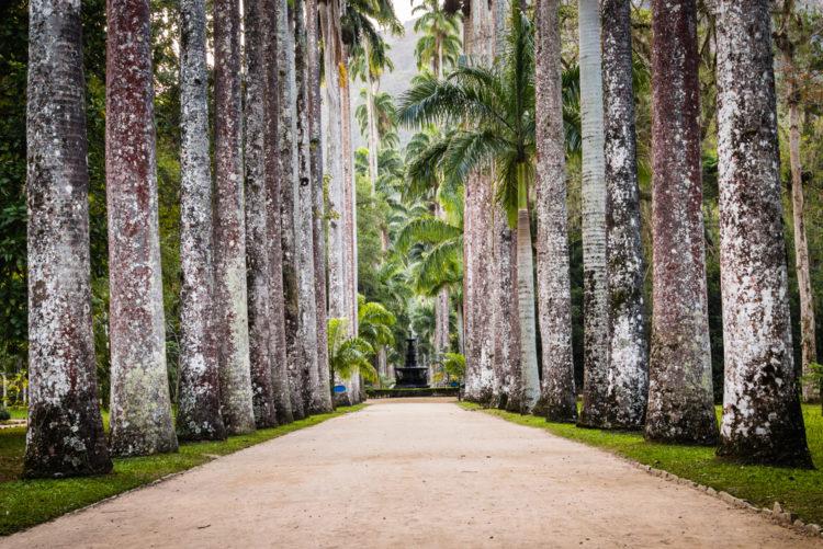 Достопримечательности Бразилии - Ботанический сад