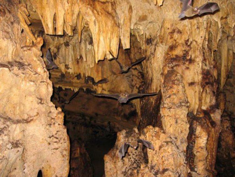 Достопримечательности Коста-Рики - Пещеры Венадо