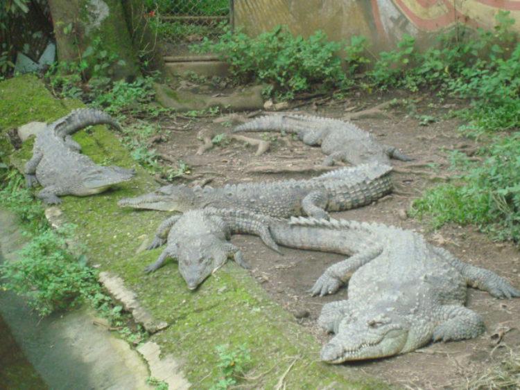 Достопримечательности Коста-Рики - Зоопарк им. Симона Боливара