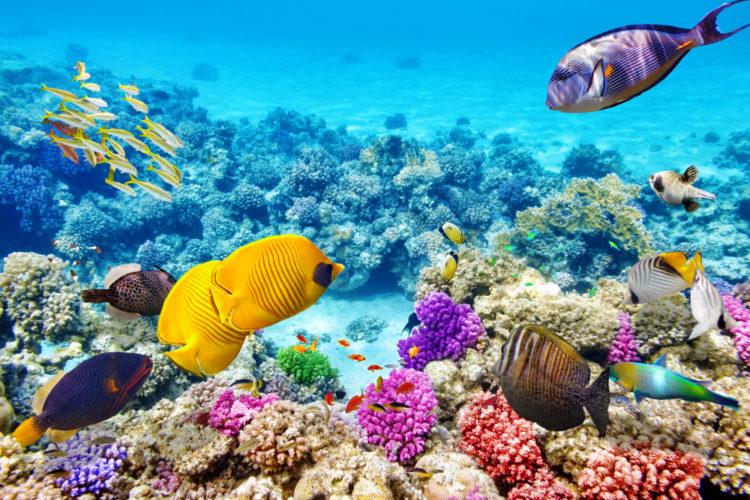 Достопримечательности Австралии - Большой Барьерный риф