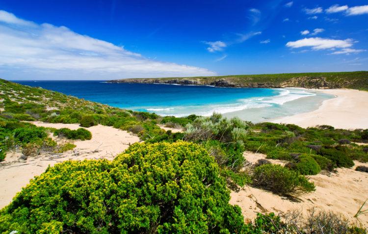 Достопримечательности Австралии - Остров кенгуру