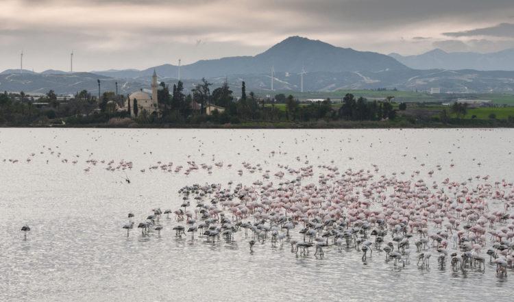 Достопримечательности Кипра - Солёное озеро и фламинго