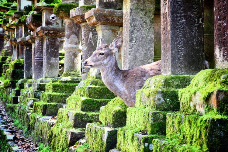 Достопримечательности Японии - Город Нара