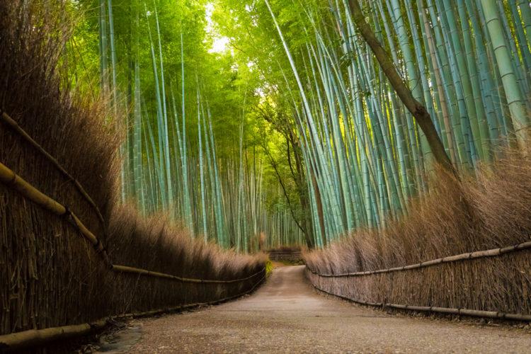Достопримечательности Японии - Бамбуковый лес Сагано