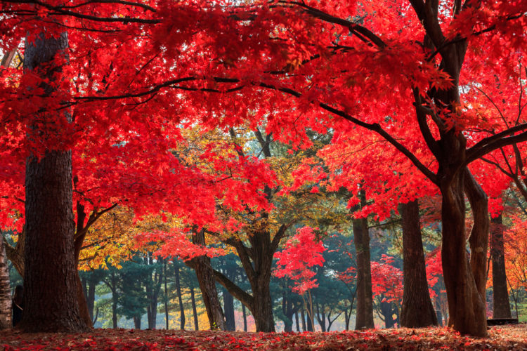 Достопримечательности Южной Кореи - Остров Намисом