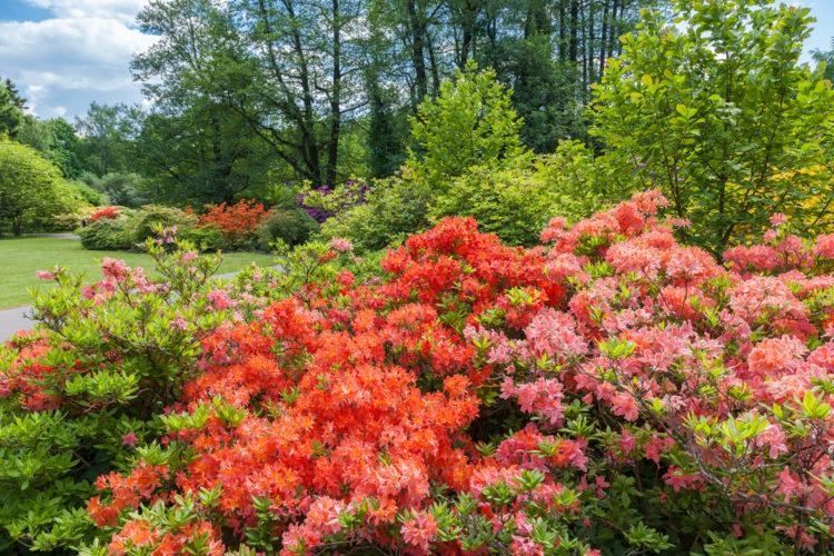 Ботанический сад - достопримечательности Латвии