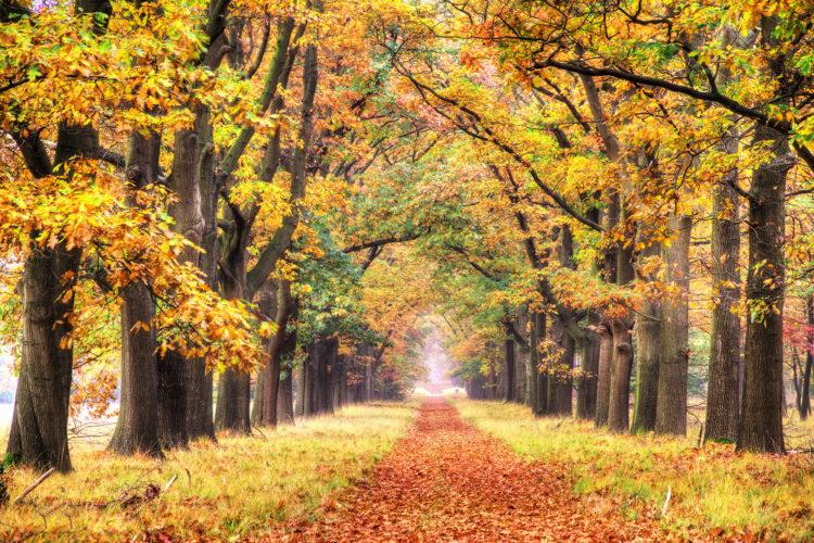 Национальный парк Де-Хоге-Велюве - достопримечательности Нидерландов