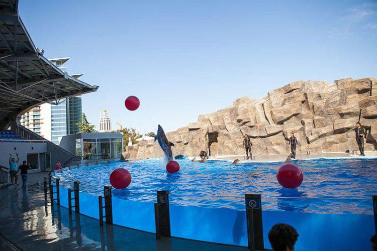 Достопримечательности Батуми - Батумский дельфинарий