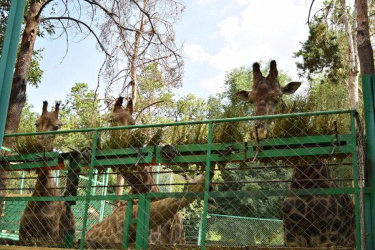 Зоопарк с секциями для животных в Алма-Ате в Казахстане