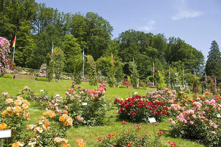 Rose Garden в городе Баден-Баден, в Германии