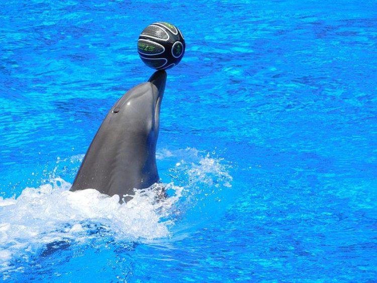 Шоу-представление в дельфинарии «Немо» - достопримечательность Алушты, Россия