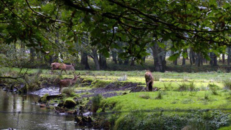Парк дикой природы Эхольт (Wildpark Eekholt) - достопримечательности Гамбурга, Германия