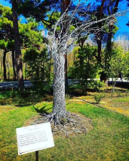 Центральный ботанический сад в Баку - достопримечательности Баку