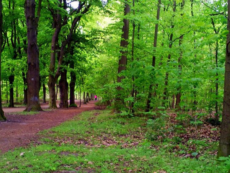 Грюнвальдский лес в Берлине - достопримечательности Берлина