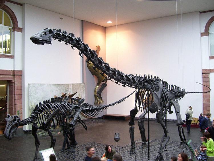 Зенкенбергский музей (Naturmuseum Senckenberg) во Франкфурте - достопримечательности Франкфурта, Германия