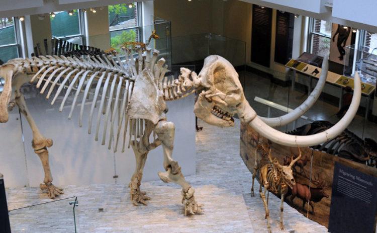 Музей естественной истории Лос-Анджелеса - Что посмотреть в Лос-Анджелесе