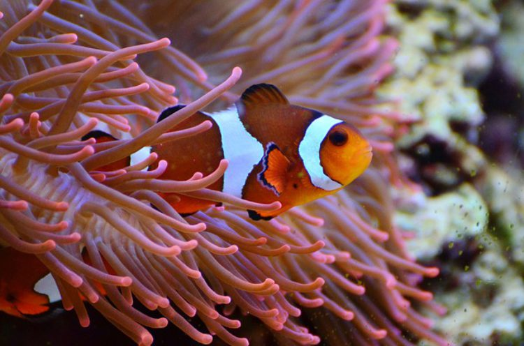 Аквариум-дю-Гранд-Леон (Aquarium du Grand Lyon ) в Лионе - достопримечательности Лиона, Франция