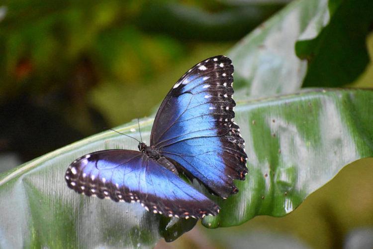 Сад бабочек в Гревенмахере - достопримечательности Люксембурга