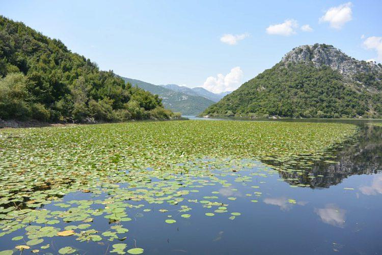 Скадарское озеро - достопримечательности Черногории