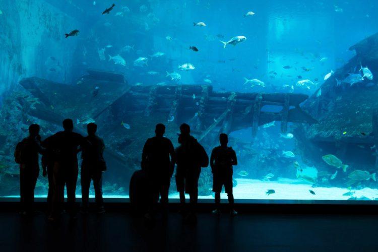 Морская Жизнь (Marine Life Park) - достопримечательности Сингапура