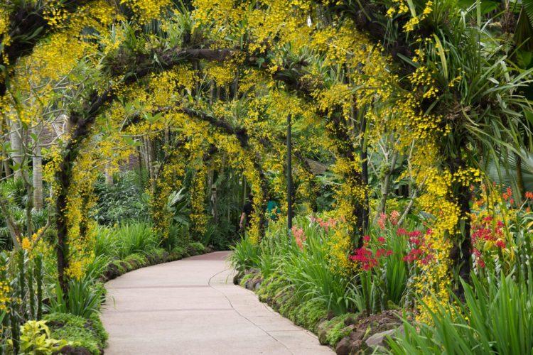 Ботанический сад Сингапура - достопримечательности Сингапура