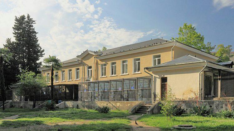 Сухумский обезьяний питомник - достопримечательности Абхазии