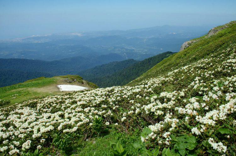 Альпийские луга Абхазии - достопримечательности Абхазии