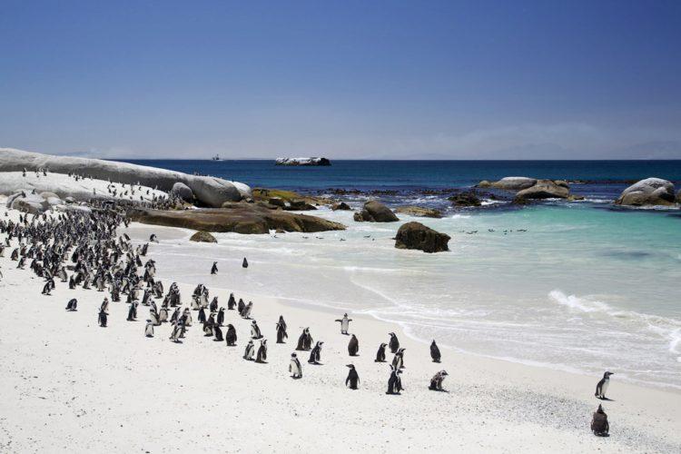 Пляж Боулдерс - Что посмотреть в ЮАР