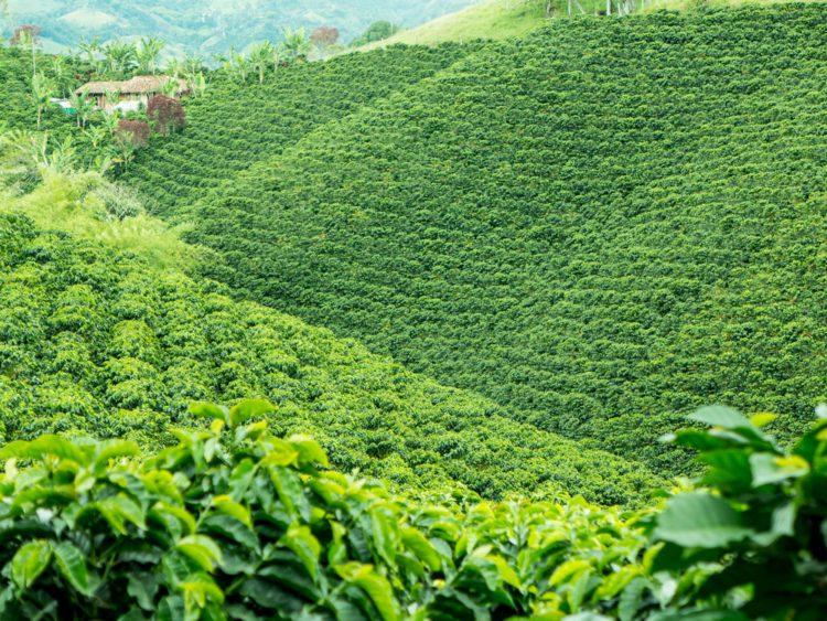 Кофейный культурный ландшафт Колумбии - Что посмотреть в Колумбии