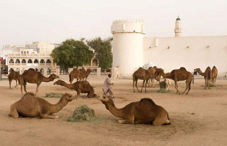 Форт Аль Кут - достопримечательности Катара