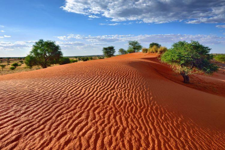 Пустыня Калахари - достопримечательности ЮАР