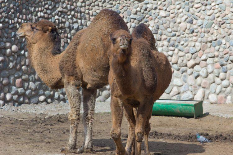 Алматинский зоопарк - достопримечательности Казахстана