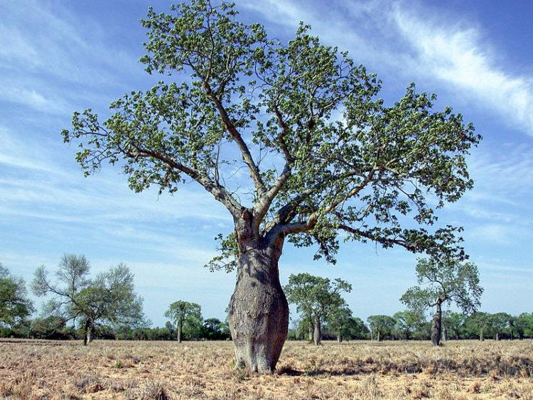 Равнины Чако (Гран Чако) - достопримечательности Парагвая