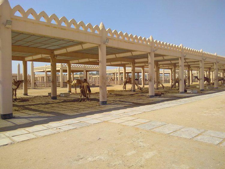 Верблюжья ферма - Что посмотреть в Бахрейне