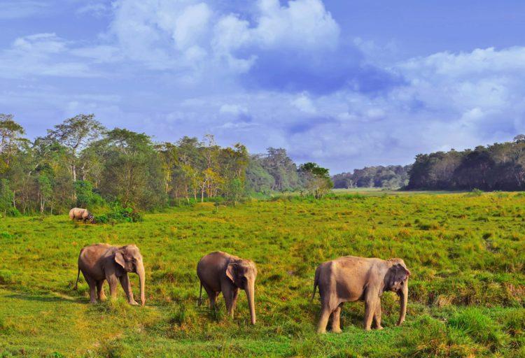 Национальный парк Читван - достопримечательности Непала