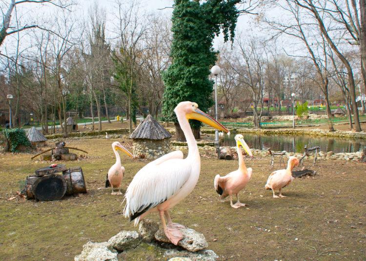 Зоопарк Варны - достопримечательности Варны