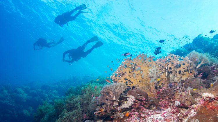 Морской парк Риф Туббатаха - достопримечательности Филиппин