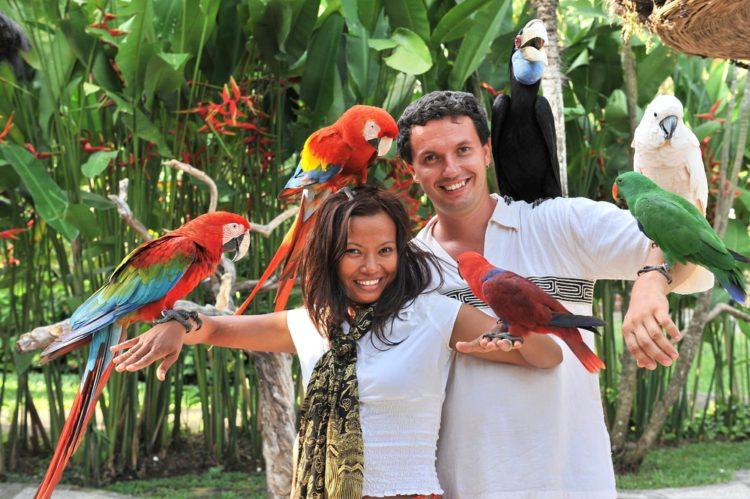 Парк птиц на Бали - достопримечательности Бали Бали все об бали бали отдых Достопримечательности Бали, что посмотреть на острове или наш ТОП-10 самых интересных мест 18 Bali Bird Park e1526692187824